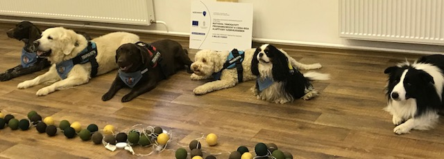 Kutyával támogatott programsorozat a Csiga-Biga Alapítvány szervezésében
