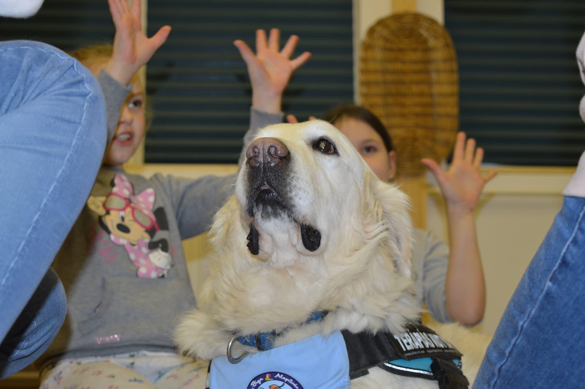 Mozgás-és képességfejlesztés terápiás kutyákkal